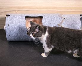 猫隧道:弹性好,抗压能力强,高温环境下环保无异味
