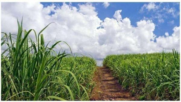 甘蔗和玉米做出的植物基聚酯纤维,环保又时尚